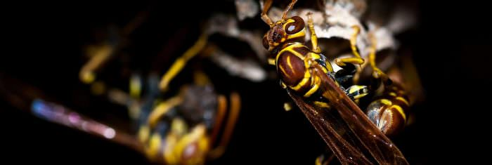 large-wasp-nest