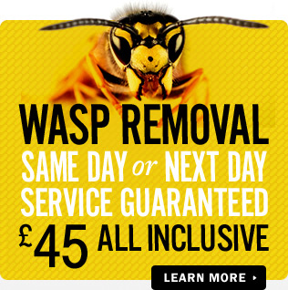 wasp nest removal huddersfield