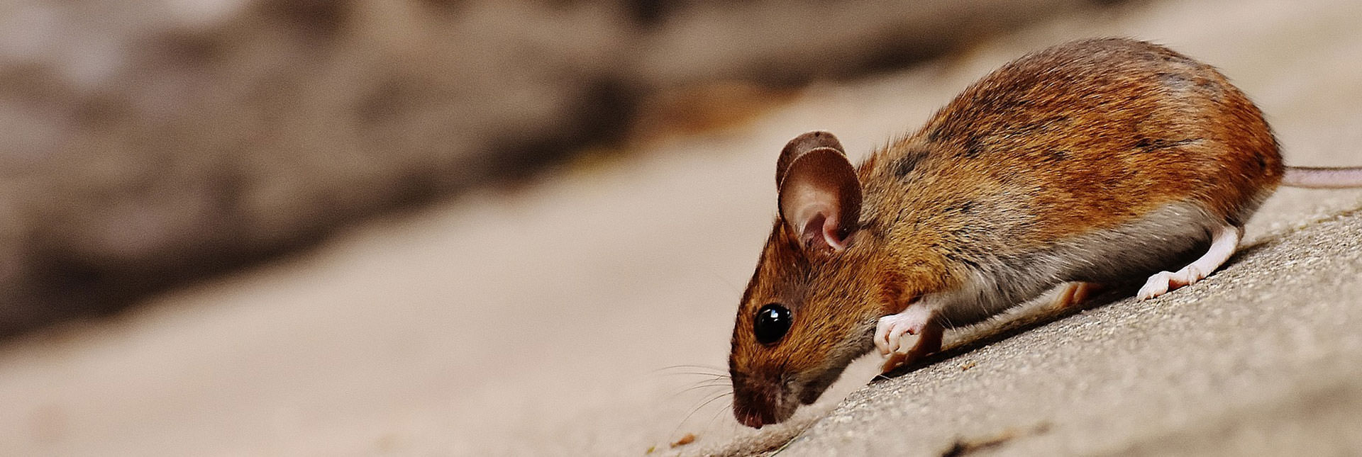 Protect Your Business from Pests
